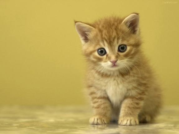 Cách chọn và nuôi mèo
