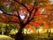 Những điểm đến tuyệt vời trong mùa thu trên thế giới