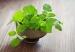 5 loại cây xanh có tác dụng đuổi muỗi trong nhà