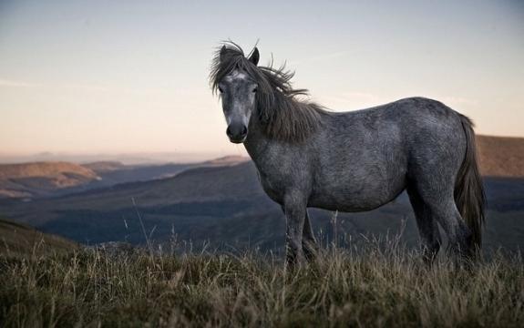 Bộ sưu tập hình nền những chú ngựa độc đáo 12