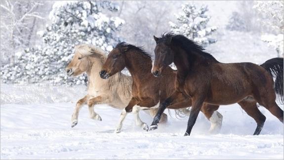 Bộ sưu tập hình nền những chú ngựa độc đáo 13