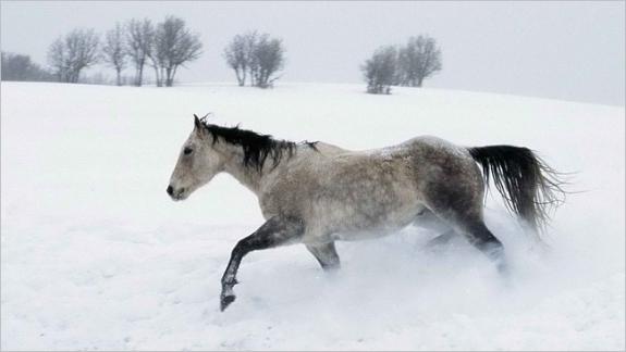 Bộ sưu tập hình nền những chú ngựa độc đáo 14