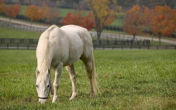 Bộ sưu tập hình nền những chú ngựa độc đáo 6