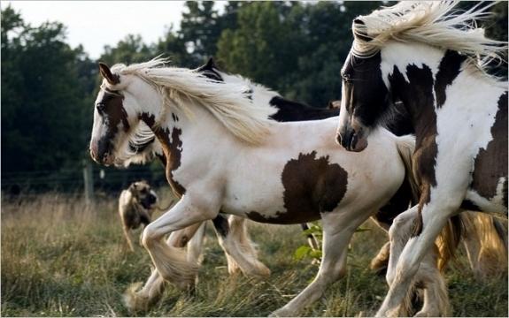 Bộ sưu tập hình nền những chú ngựa độc đáo 7