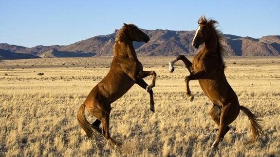 Bộ sưu tập hình nền những chú ngựa độc đáo 9